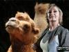 Bactrian Camel - Sue Dupré (designed by Laura Zwanzinger / Max Gengos)